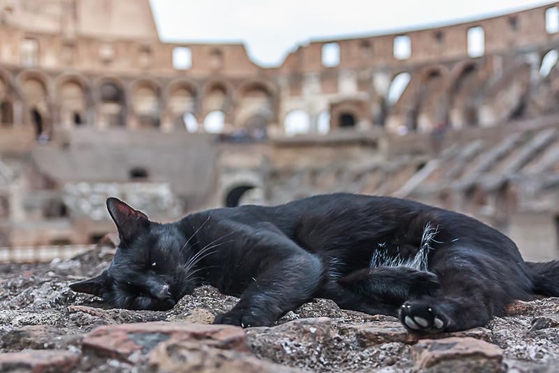 case vacanze animali roma
